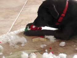 This is what Soze does to his X-mas present. Your application might be next.